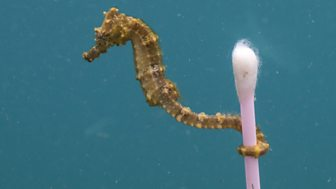 Sustainable Packaging | Seahorse BBC Blue Planet